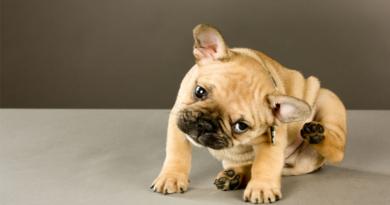 cómo evitar las garrapatas en tu perro cómo evitar las garrapatas en mi perro