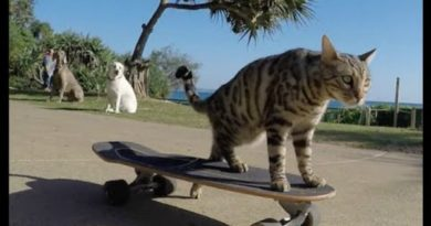 boomer el gato skater petmondo international