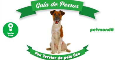 fox terrier de pelo liso petmondo international