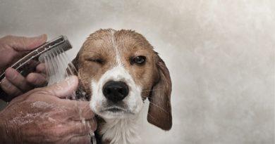 cómo bañar a un perro petmondo international