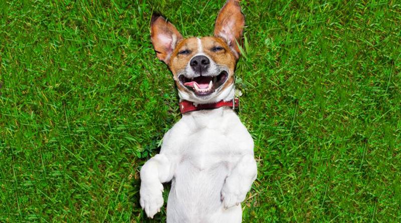 cómo limpiar las orejas de mi perro petmondo international