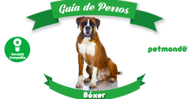 perro bóxer petmondo international bing google yahoo mascotas pet