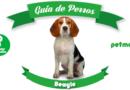 Perro Beagle: un gran sabueso rastreador