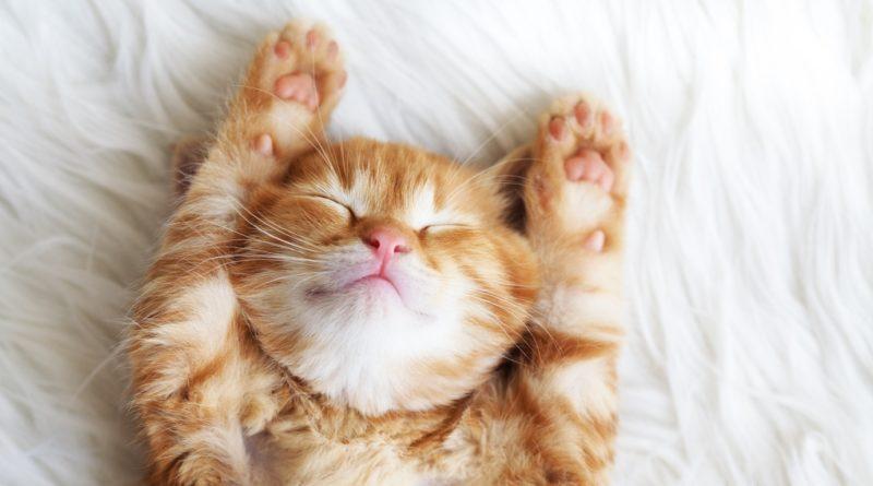 8 imágenes de gatos que alegrarán tu semana