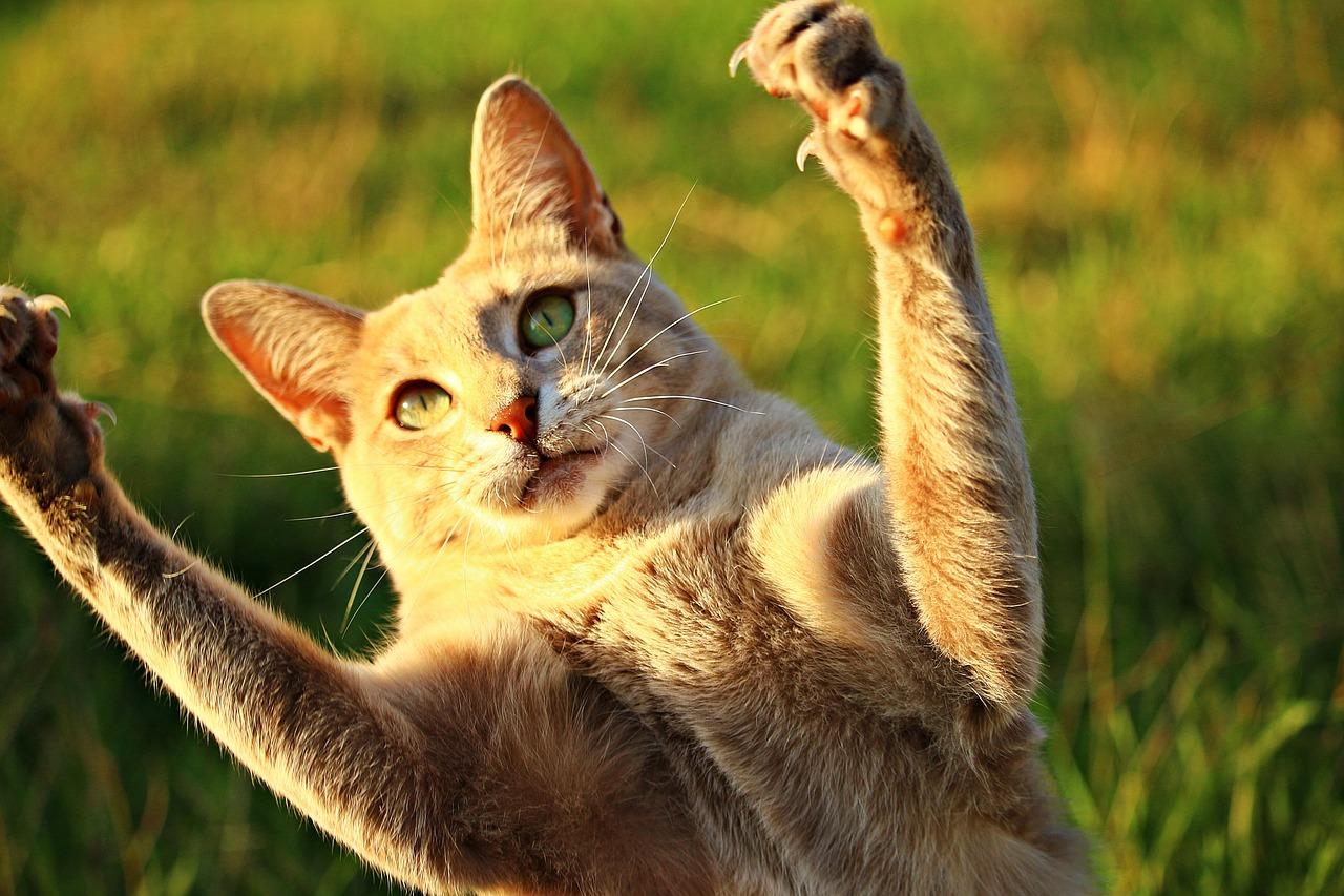 10 imágenes de gatos que te alegrarán la semana