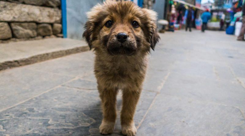 cómo cuidar a un perro callejero petmondo international