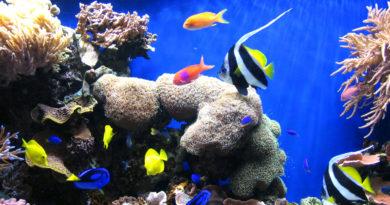 Monterey Bay Aquarium petmondo international