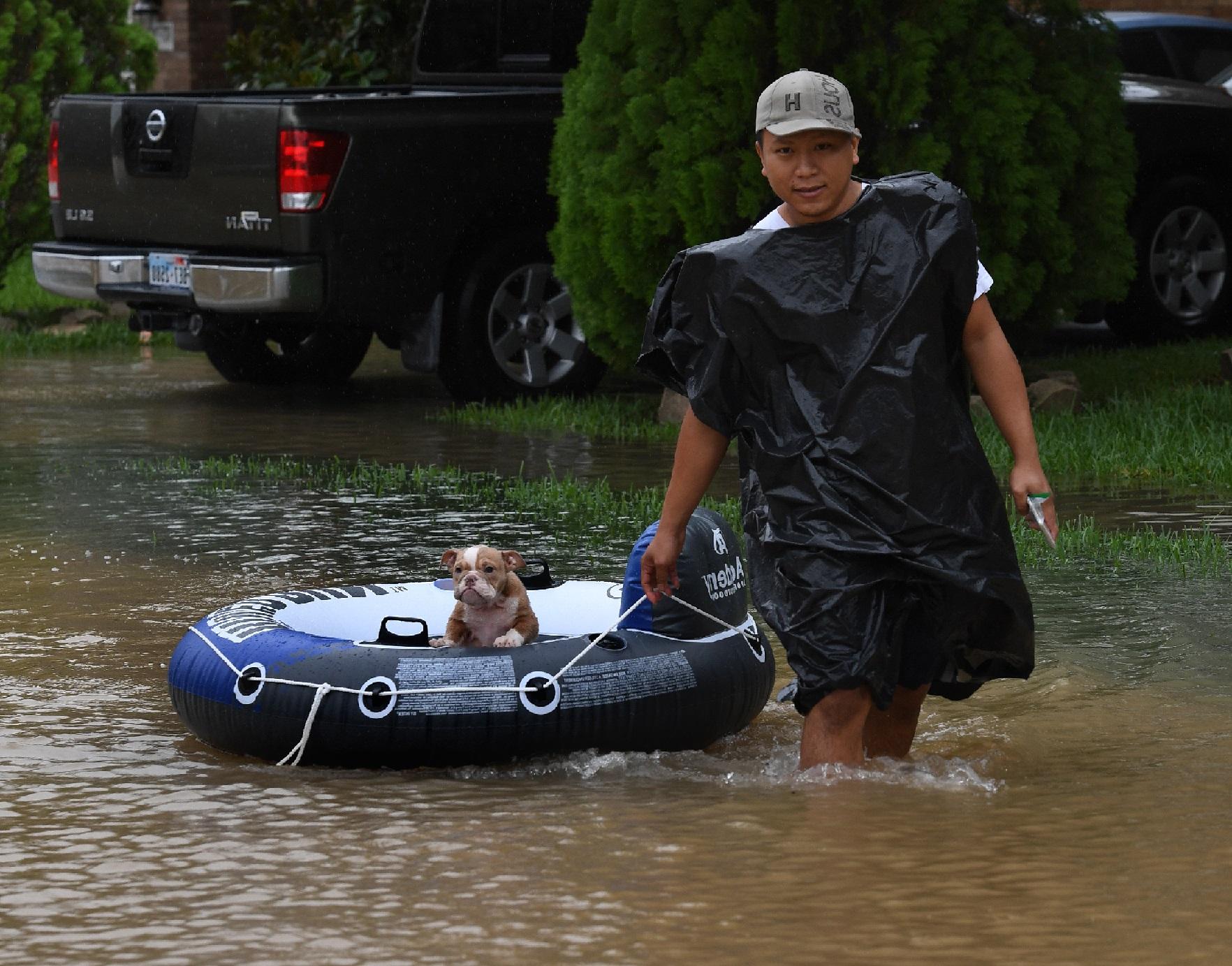 afectados por el huracán Harvey petmondo international mascotas texas houston harvey hurricane