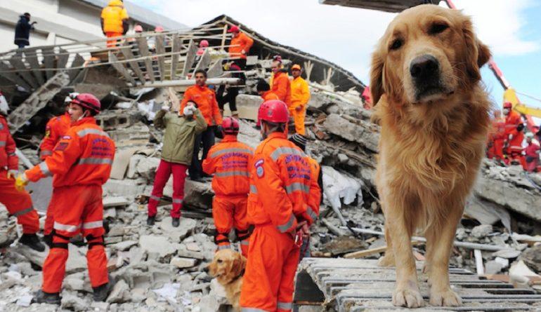 los animales pueden predecir un terremoto petmondo international perros y gatos