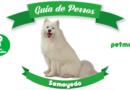 perro samoyedo perro ruso petmondo international huskey siberiano alaskan malamute a