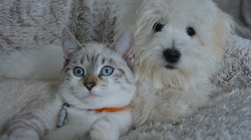 10 imágenes tiernas de mascotas