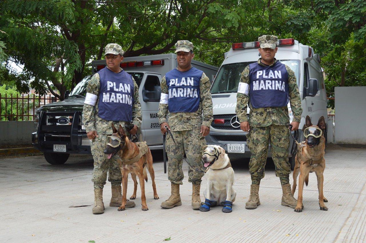 perros rescatistas de México perros UNAM mascotas petmondo