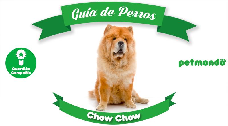 Perro Chow Chow: un interesante perro chino
