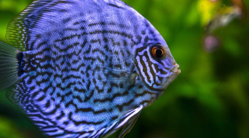 mis peces no comen petmondo international mis peces no quieren comer que hago