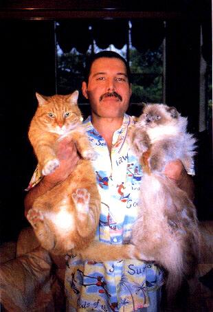 los gatos de Freddie Mercury