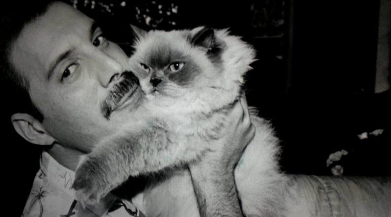 los gatos de Freddie Mercury Queen petmondo international