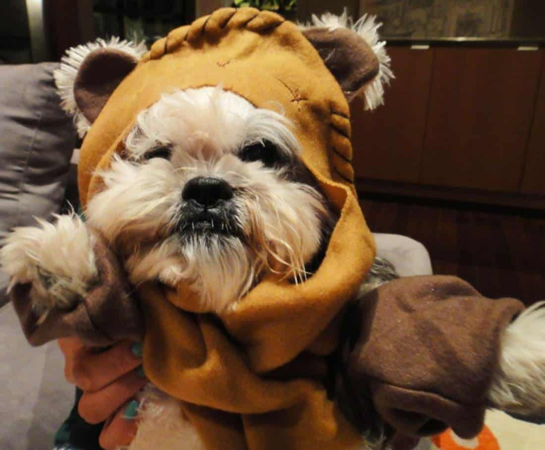 Star Wars disfraces de Star Wars para perros petmondo
