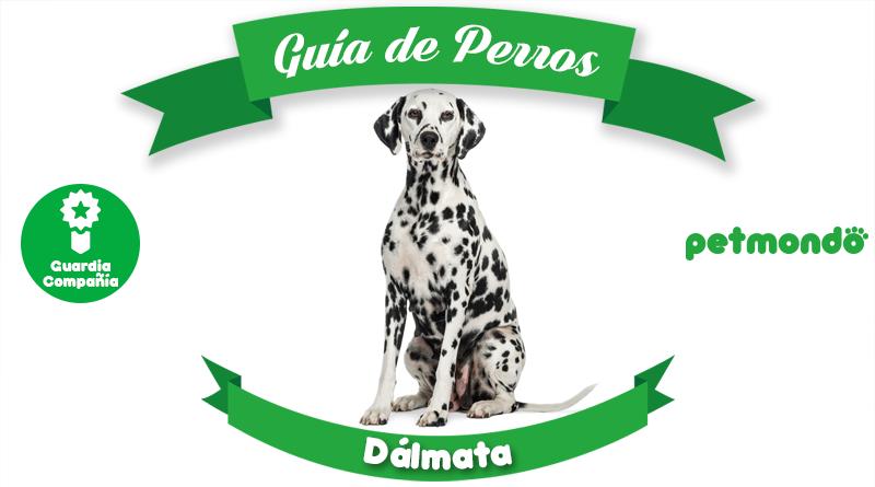 dalmata perro dálmata petmondo international bomberos