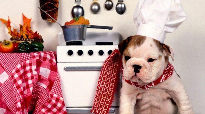 comida para perros recetas de comida para perros petmondo international