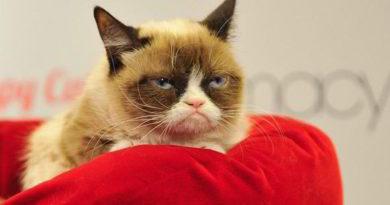 Grumpy cat: un poco de historia de Tardar Sauce