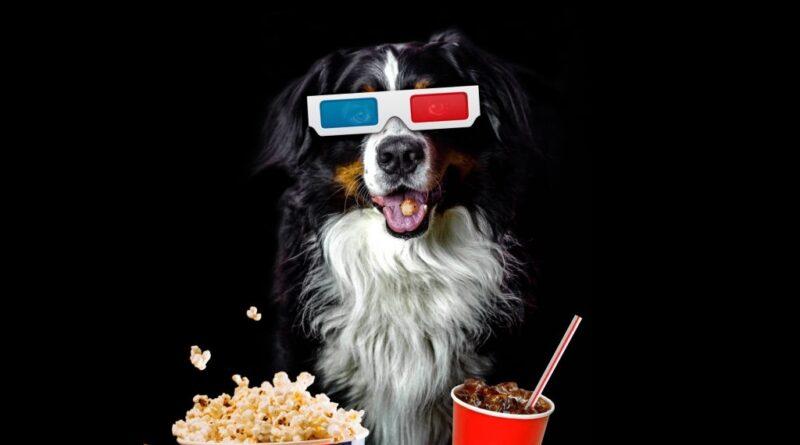 las mejores películas de perros petmondo