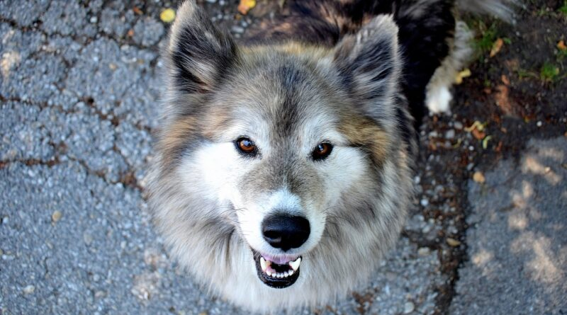 Desparasitar perros | Petmondo