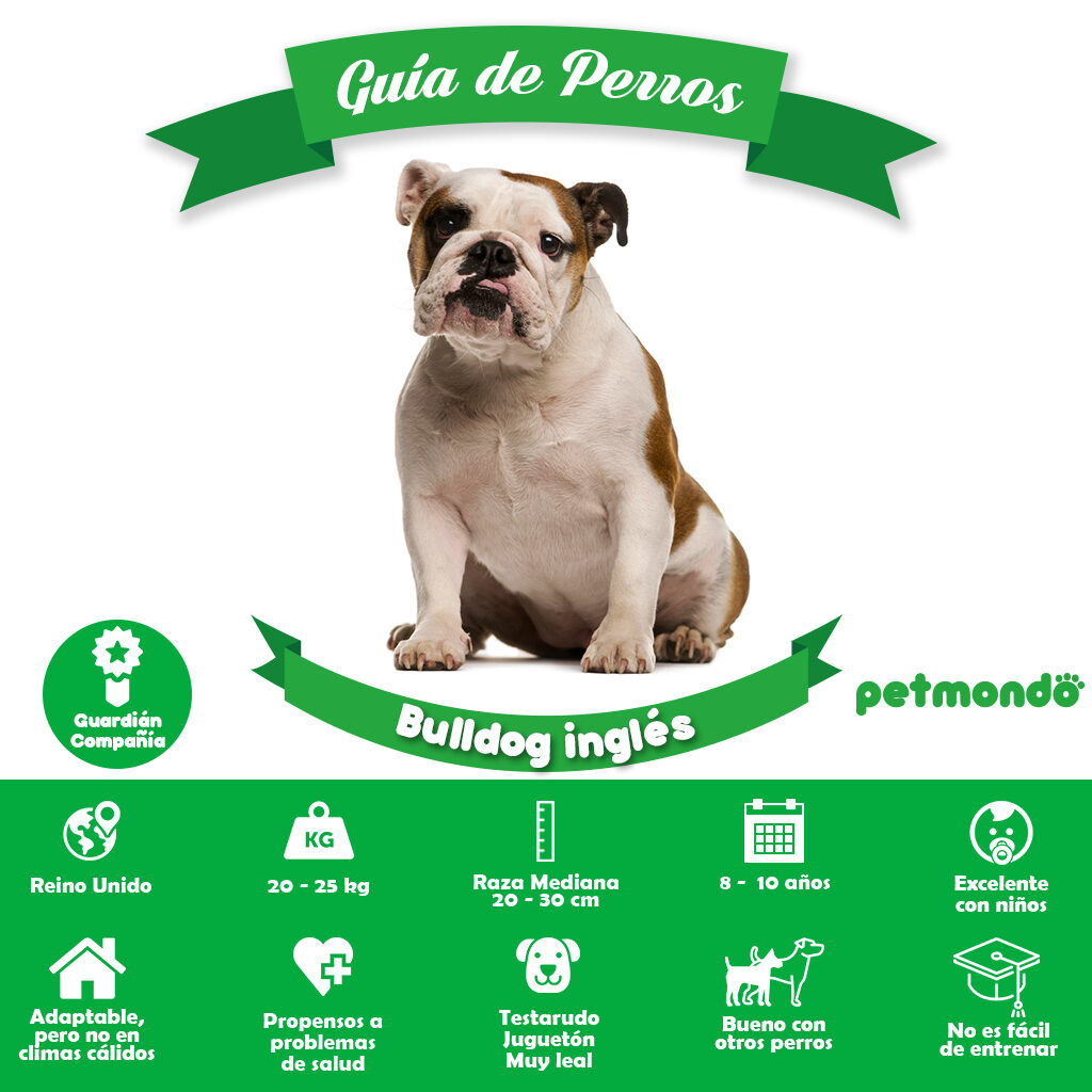 Bulldog inglés | Petmondo